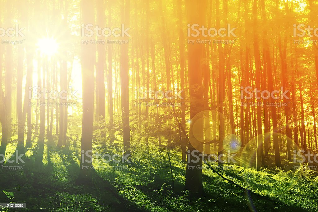 Sunny rays in the morning in mystical forest stock photo