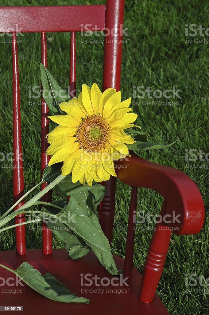 Sunny Seat royalty free stockfoto