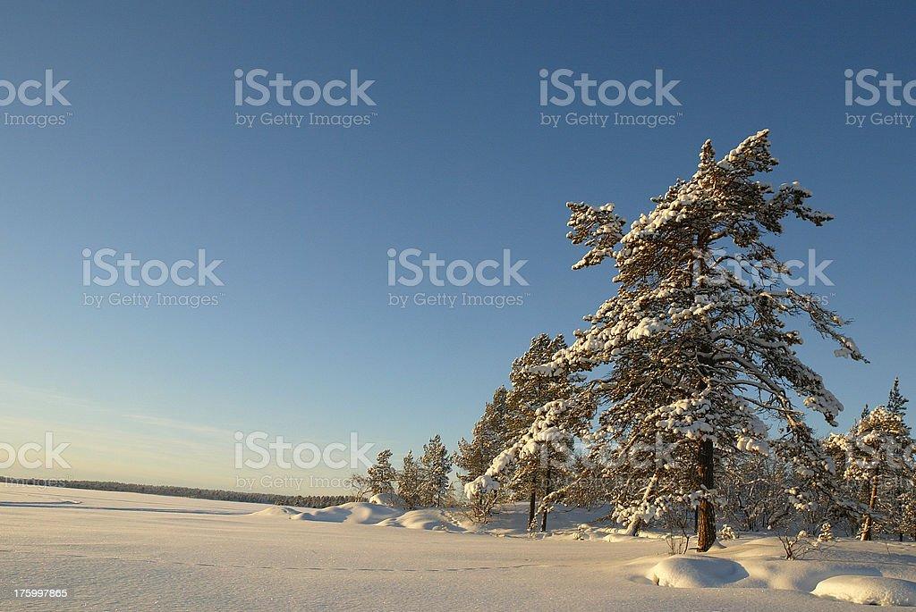Sunny Snow Landscape Finland Lapland royalty-free stock photo