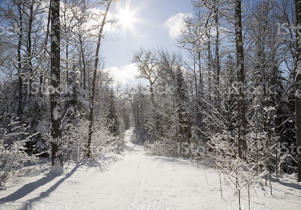 Sunny Snowmobile Trail royalty-free stock photo