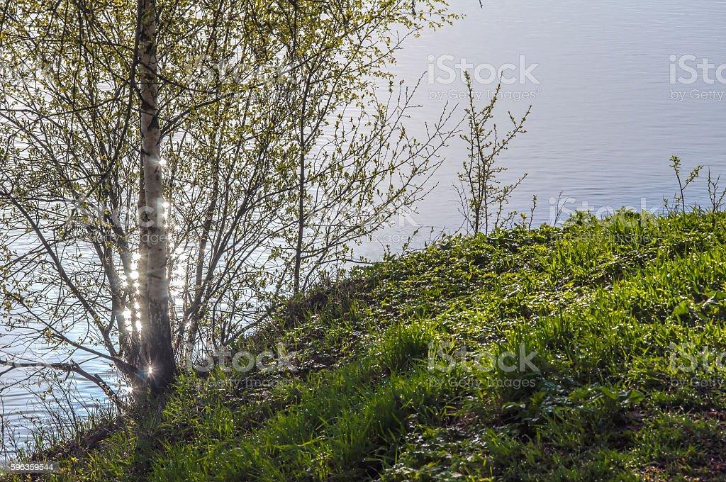 Sunny spring light royalty-free stock photo