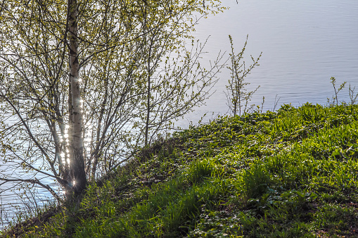 Sunny Spring Light Stock Photo - Download Image Now