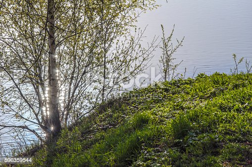 Sunny Spring Light Stock Photo & More Pictures of Birch Tree