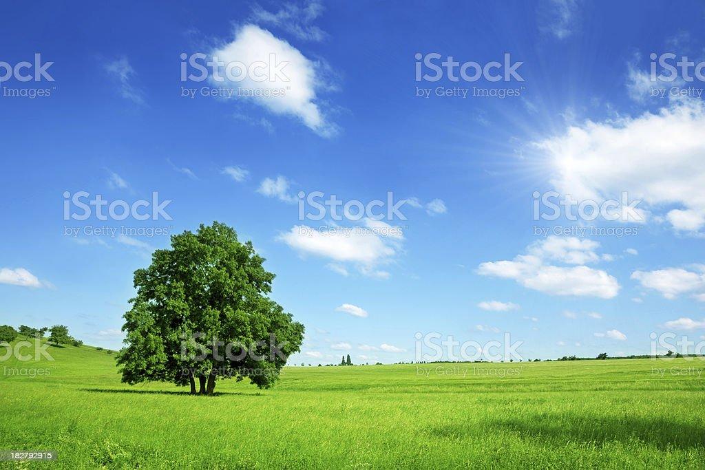 Sunny Summer Landscape royalty-free stock photo