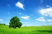 晴れた夏の風景