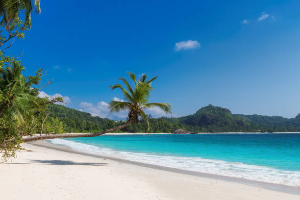 Sunny tropical beach with turquoise sea stock photo