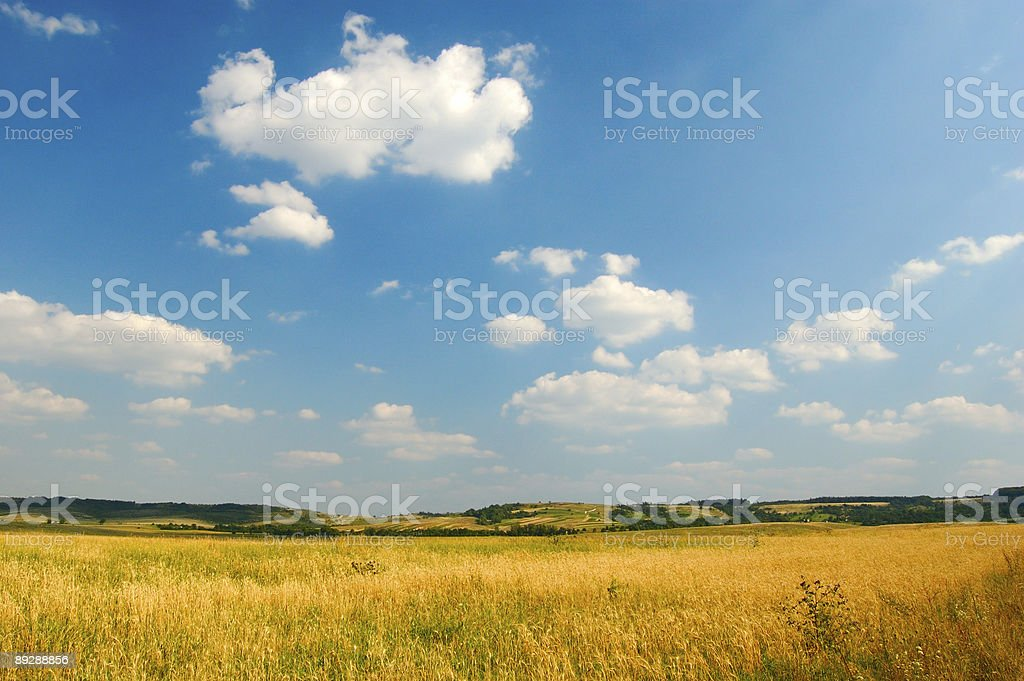 Sunny view on meadow royalty-free stock photo