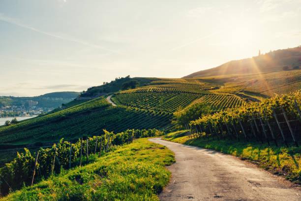 Sonnige Weinberge in Deutschland – Foto