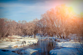 Sunny winter day by a small river