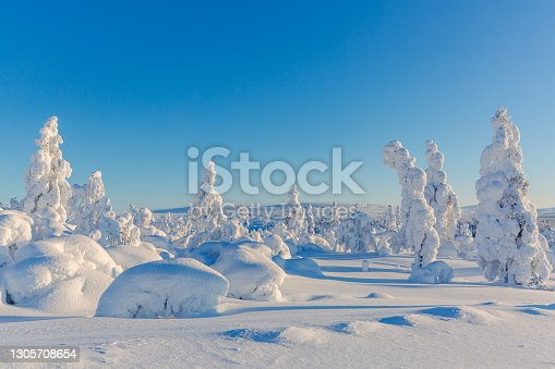 Sunny winter landscape with frozen snowy trees.