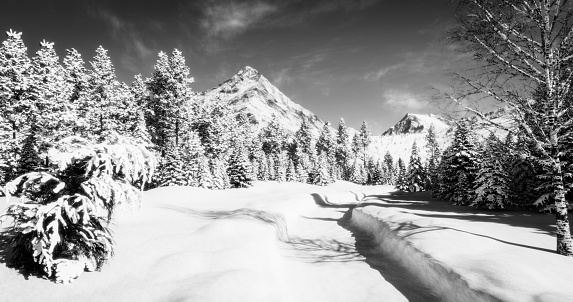 Black And White Wallpapers Free Hd Download 500 Hq Unsplash