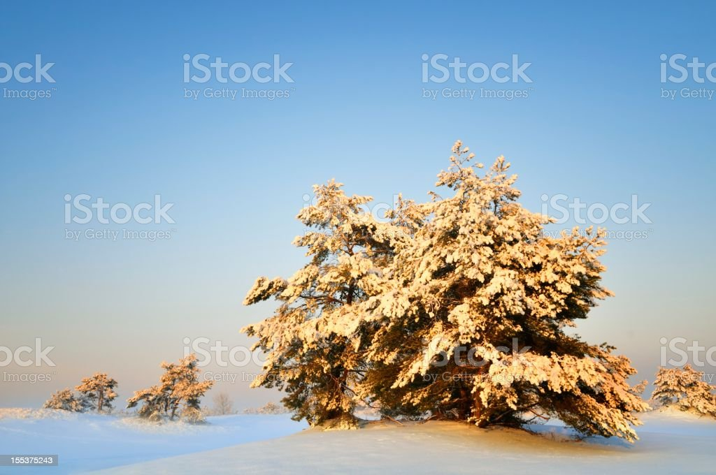 Sunny Winter Landscape royalty-free stock photo