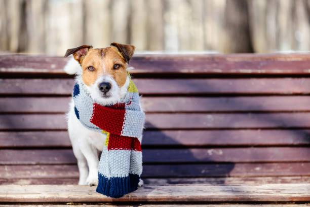 Sunny winter scene with dog wearing cozy warm knitted scarf picture id846352212?b=1&k=6&m=846352212&s=612x612&w=0&h=angvtmoq2zu 01oqlmgrsuw yyajoaohxkprcmo2cdy=