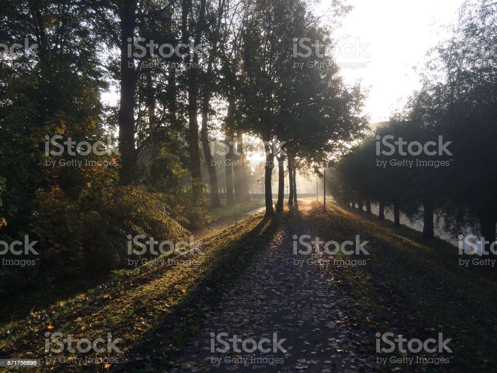 zonnestralen komt via de bomen op een smalle weg in Nieuwerkerk aan den Ijssel foto