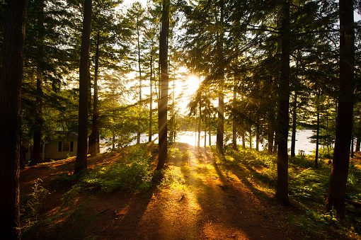 Sunrays filtering to the trees near a cottage