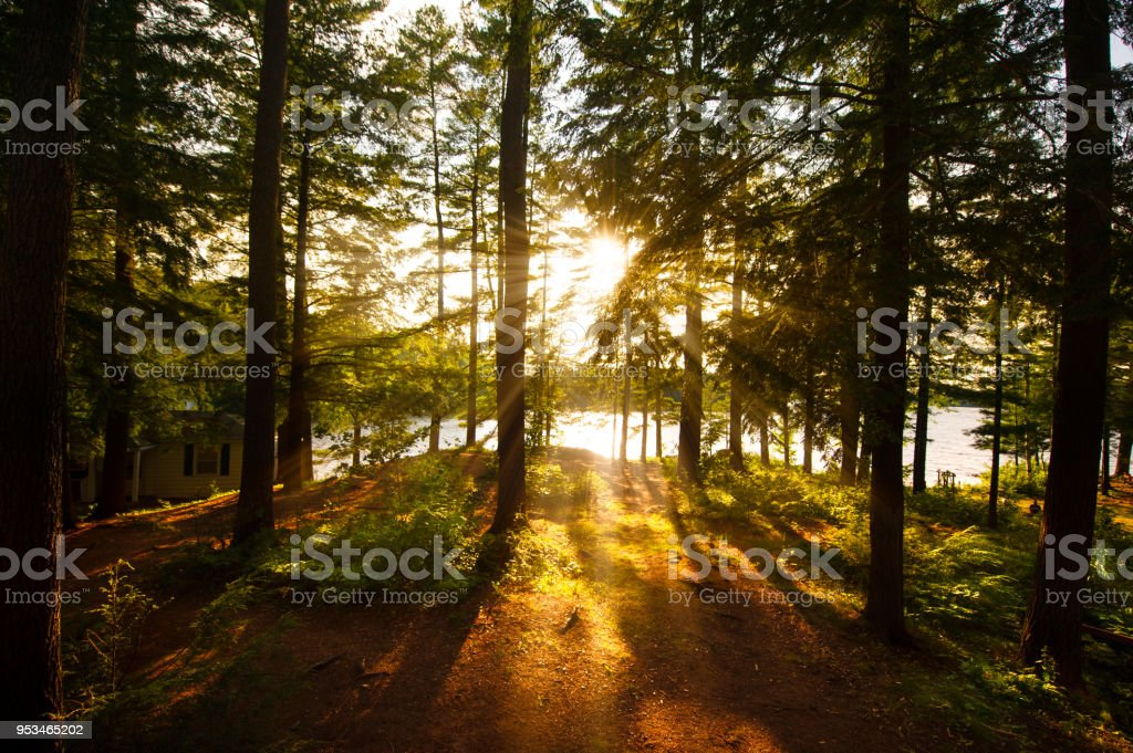 Sunrays filtering to the trees near a cottage stock photo