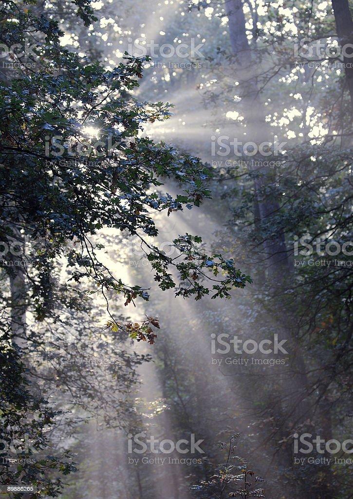 Sunrays Bosque en otoño foto de stock libre de derechos