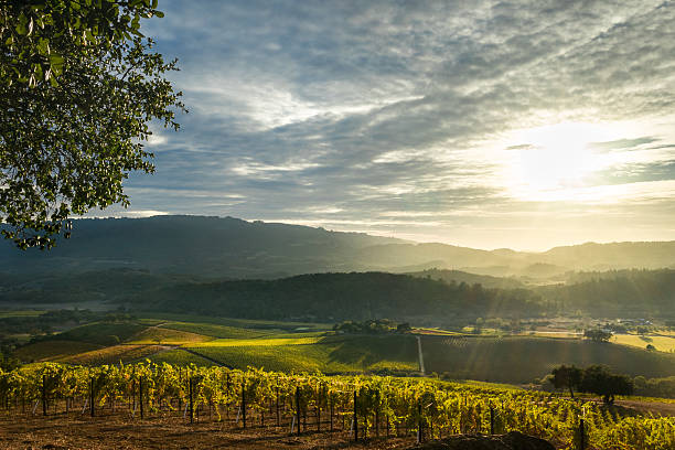 Sunrays shine on patchwork Sonoma vineyard and mountains at sunset Panorama of Sonoma Valley wine country with rolling hills in autumn at harvest time. sonoma stock pictures, royalty-free photos & images