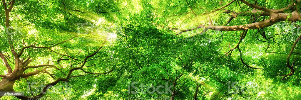 Sunrays shining through high treetops stock photo