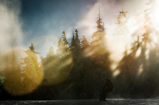 Sunrays shining through trees with snowboarder making turns.