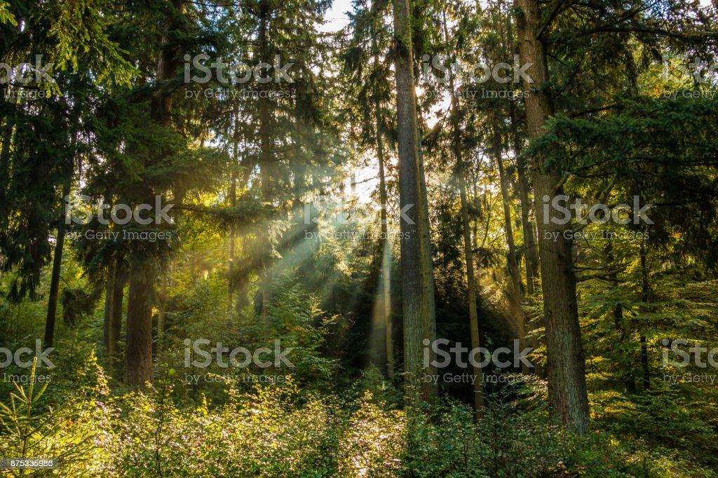 Sonne wecken, das durch die Bäume – Foto
