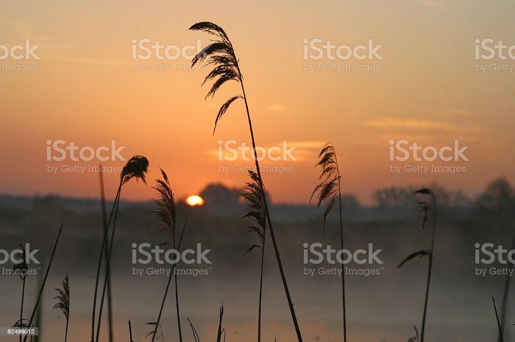 Sunrise 1 Lizenzfreies stock-foto