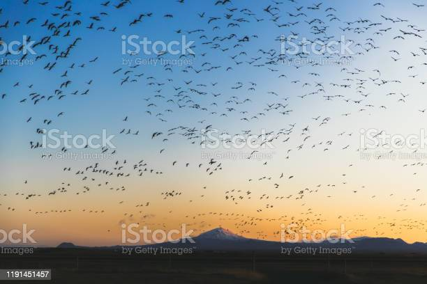 Sunrise above scenic volcano with flock of birds in iceland picture id1191451457?b=1&k=6&m=1191451457&s=612x612&h=ld 1xwhv00zkfuyo1nlxryk9aacpgsuu869su 75dic=