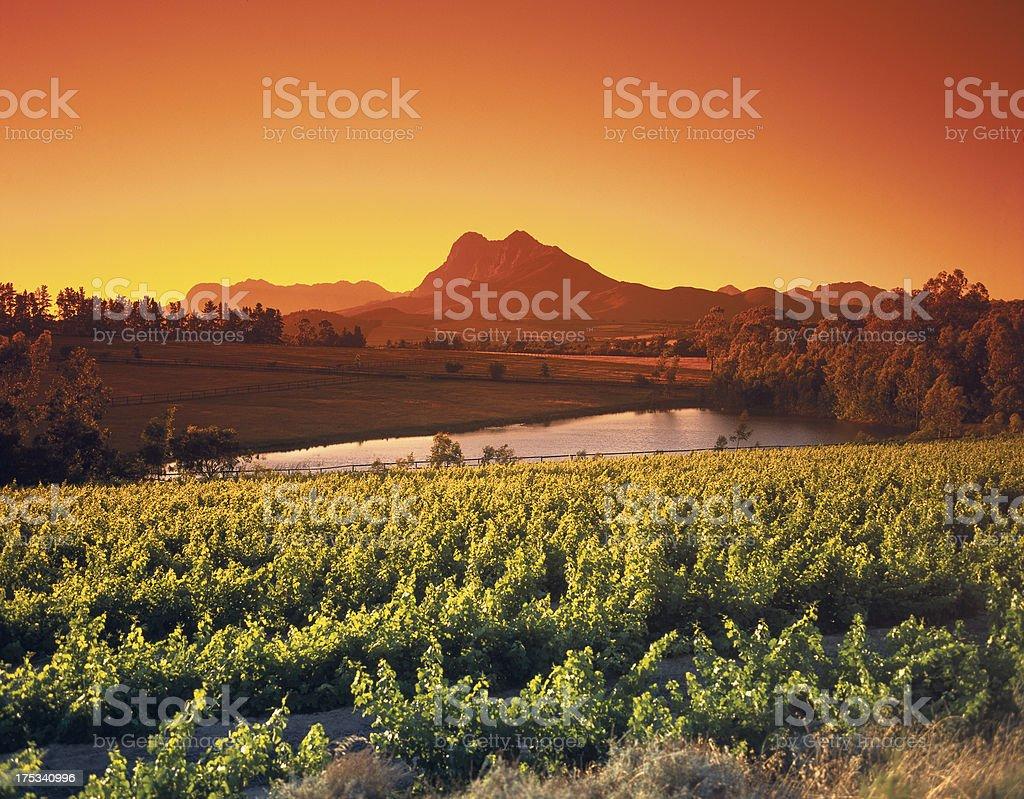Sonnenaufgang über dem Wein & Weinanbaugebieten Paarl, Western Cape, Südafrika Lizenzfreies stock-foto