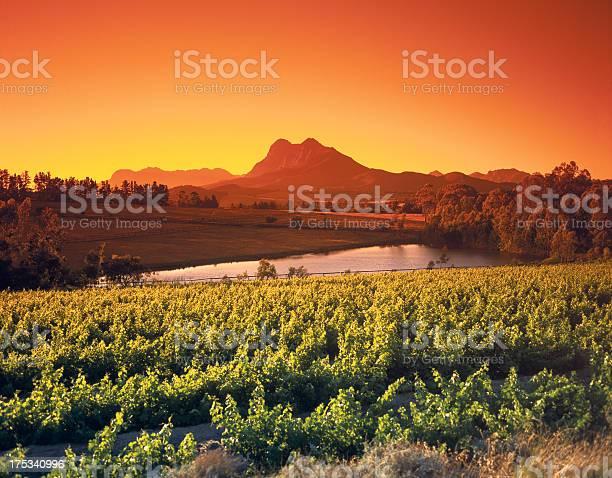 Sonnenaufgang Über Dem Wein Weinanbaugebieten Paarl Western Cape Südafrika Stockfoto und mehr Bilder von Alkoholisches Getränk