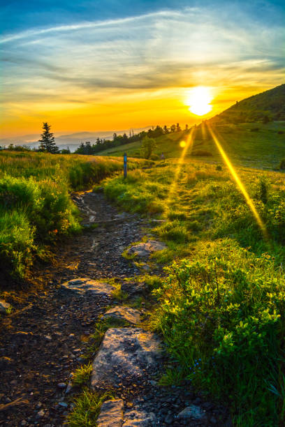 Sunrise Along the Appalachian Trail in the Roan Highlands Sunrise out from Jane Bald along the Appalachian Trail in the Roan Highlands. appalachian trail stock pictures, royalty-free photos & images