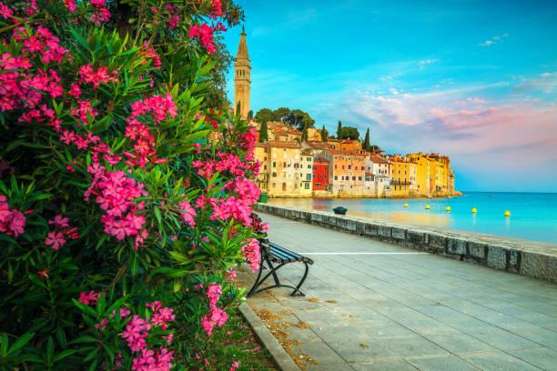 Sunrise and morning cityscape with flowery promenade, Rovinj, Istria, Croatia stock photo