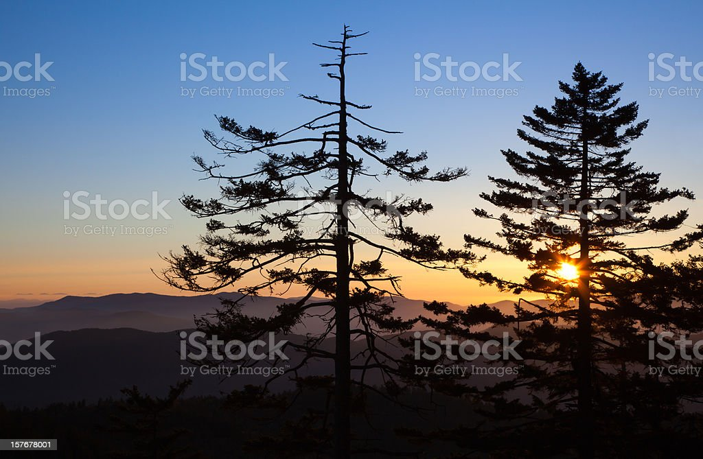 Sunrise and Pines royalty-free stock photo
