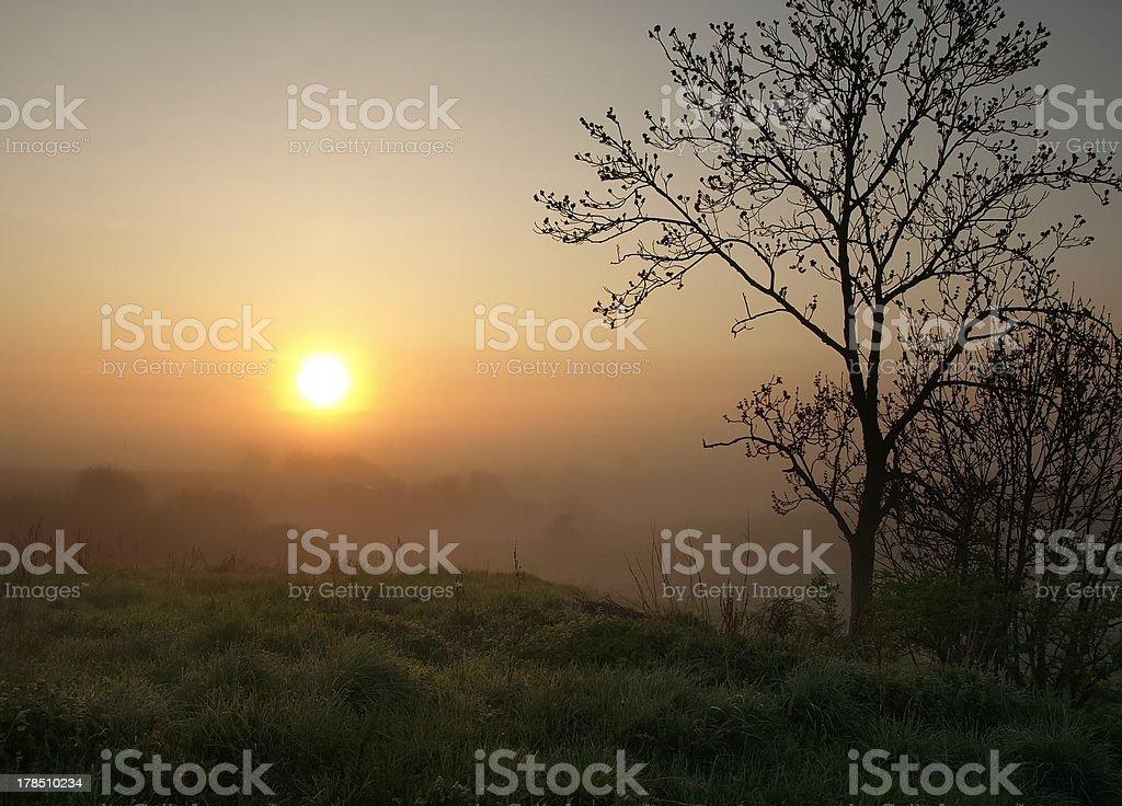 sunrise and tree royalty-free stock photo