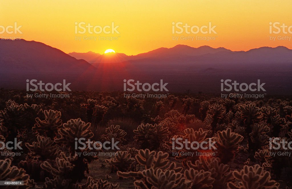 Sunrise at Joshua Tree National Park stock photo