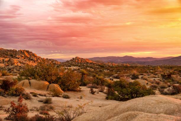 sonnenaufgang in joshua tree national park - wüstenarten stock-fotos und bilder