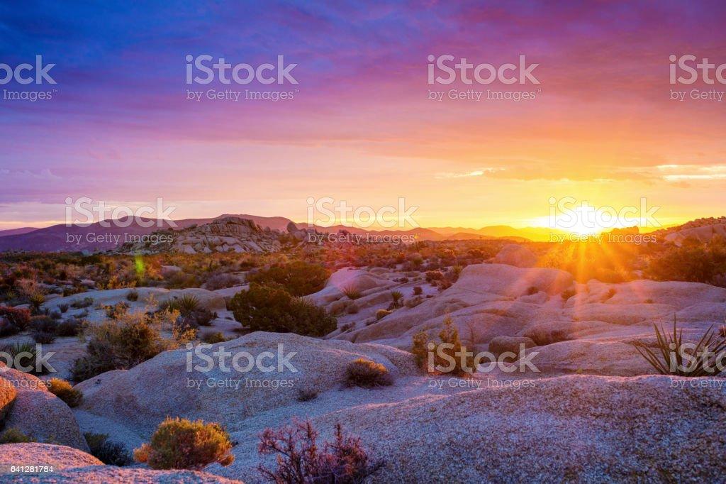Sunrise at Joshua Tree National Park stock photo