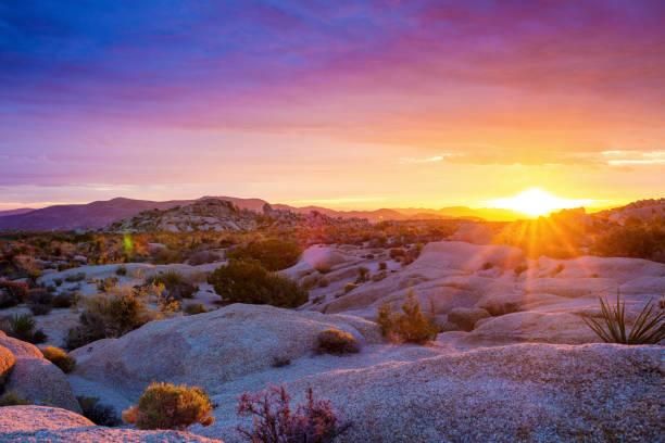 Nascer do sol no Parque Nacional de Joshua Tree - foto de acervo