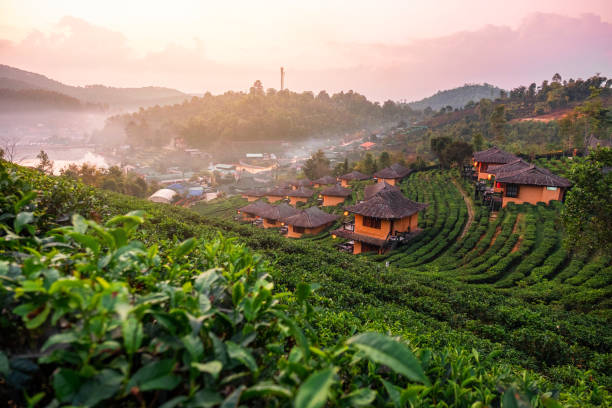 Sunrise at Lee wine Rak Thai, Chinese settlement, Mae Hong Son, Thailand Sunrise at Lee wine Rak Thai, Chinese settlement, Mae Hong Son, Thailand chiang mai province stock pictures, royalty-free photos & images