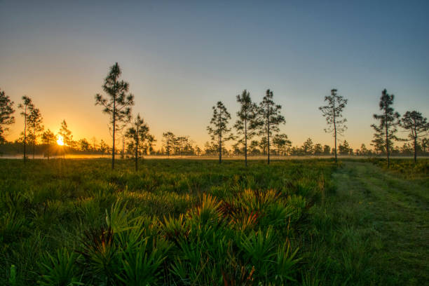 Sonnenaufgang im Orlando Park Hal Scott Preserve a Natural Central Florida Woodlands mit Palm und Pine Trees in der Nähe – Foto