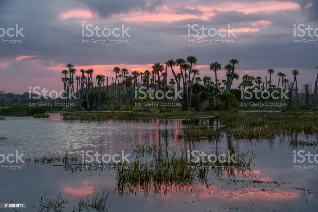 Sunrise at Orlando Wetlands Park in Central Florida stock photo