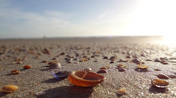 Sonnenaufgang in St. Augustine Beach, Florida – Foto