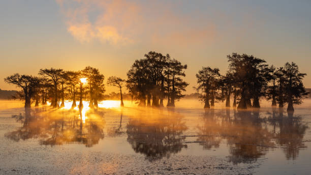 zonsopgang bij moeras bij caddo lake texas - bald cypress tree stockfoto's en -beelden