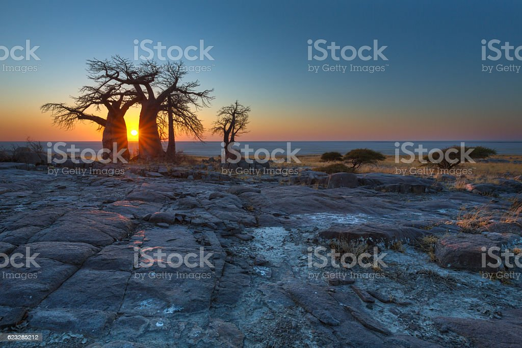 Sunrise at the Baobabs stock photo