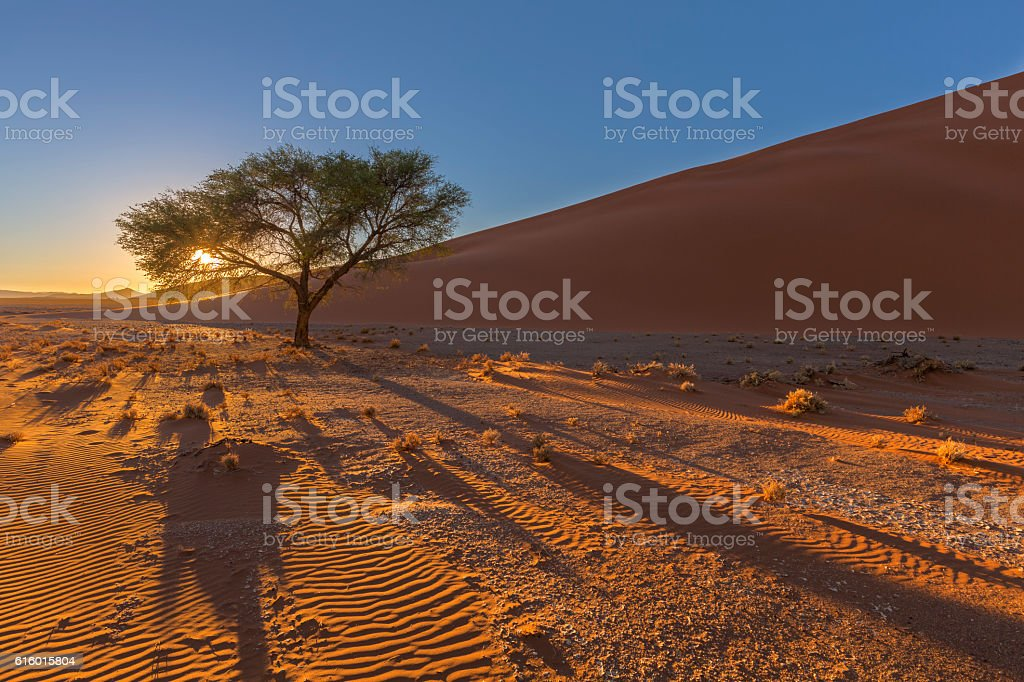 Sunrise at the dune stock photo