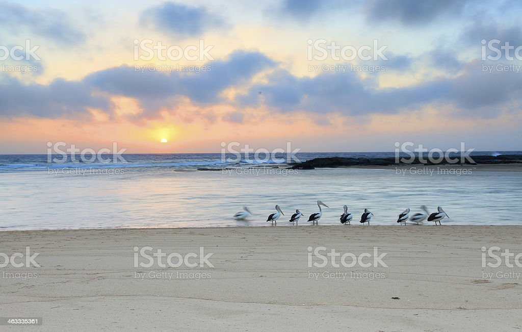 Sunrise at The Entrance North,  Australia stock photo