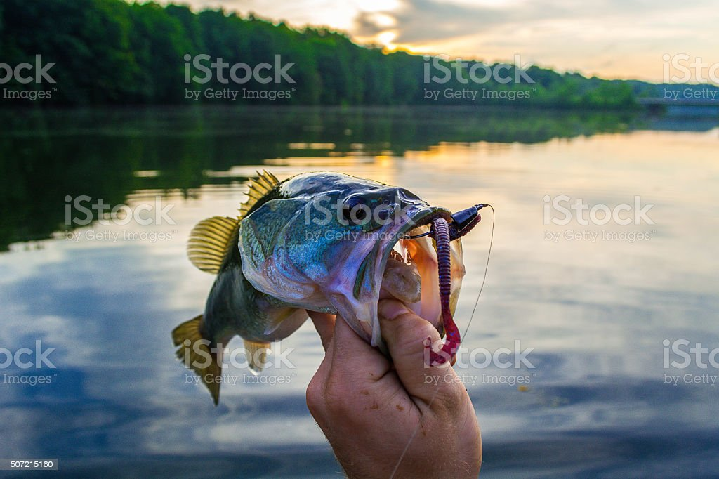 Sunrise bass stock photo