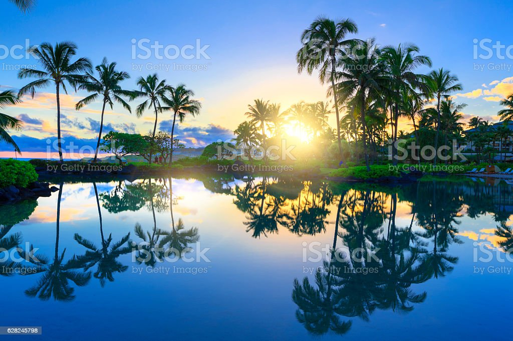 Sunrise behind palm trees in Kauai, Hawaii stock photo