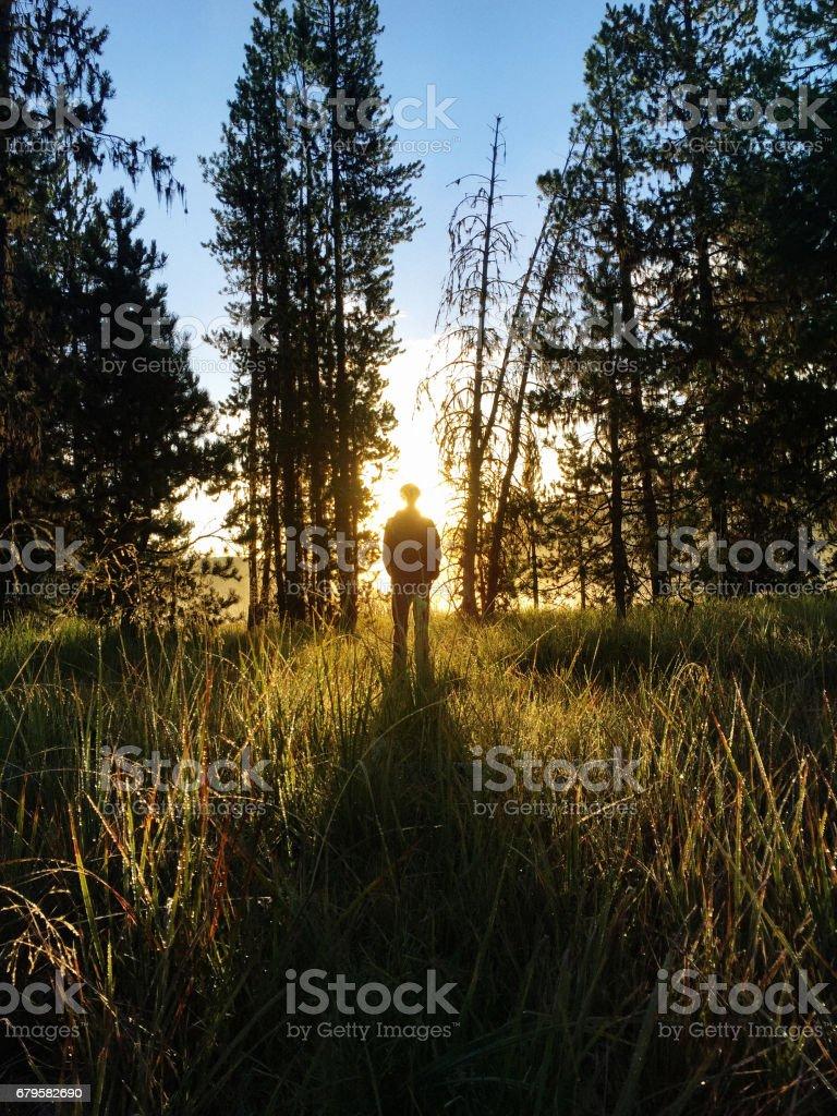 Sunrise Contemplation in Nature stock photo