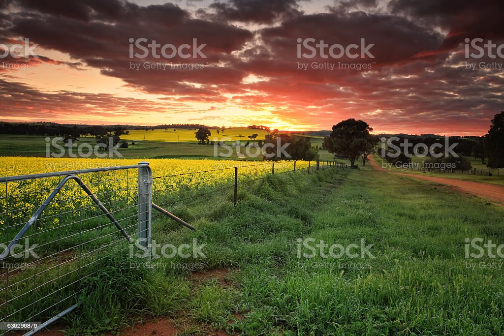 Sunrise farmlands Australia stock photo