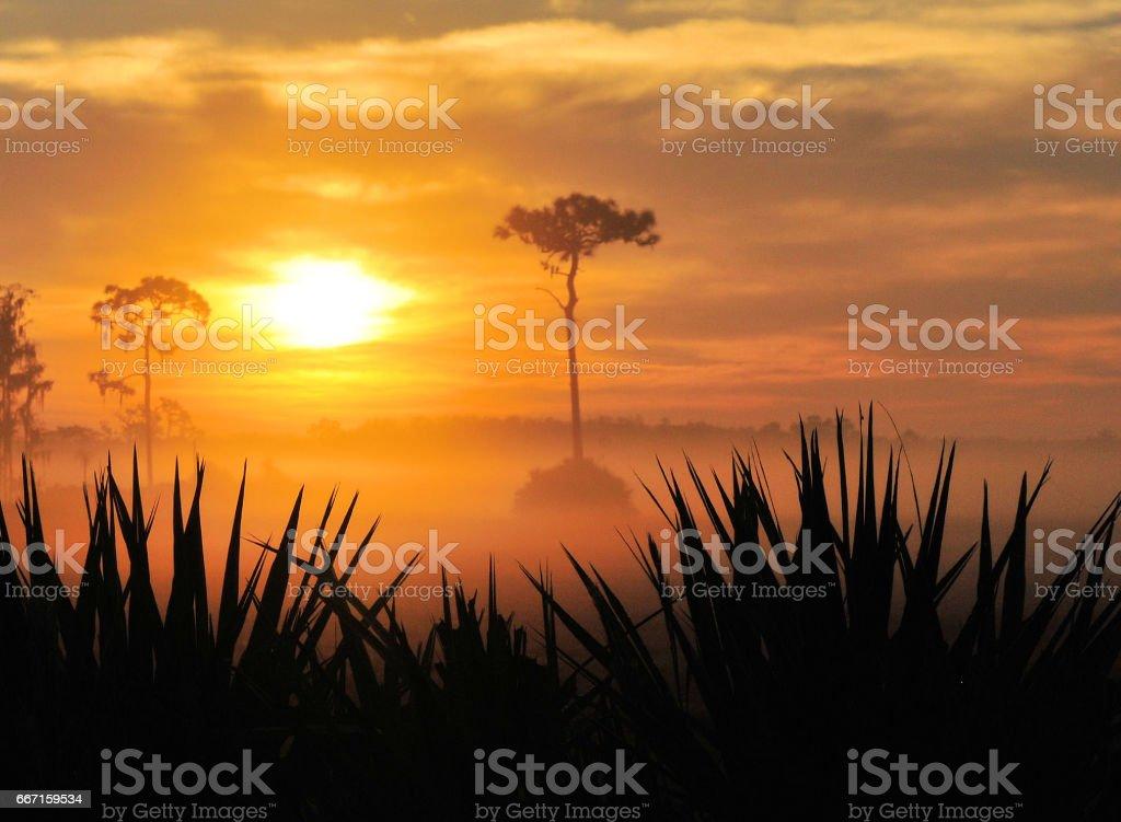 Sunrise Fog stock photo